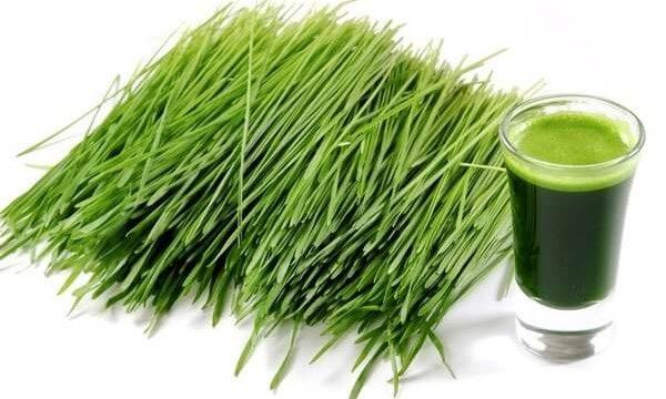 Green Magma – Jęczmień Na Odchudzanie,Schudnij Z Green Barley Plus