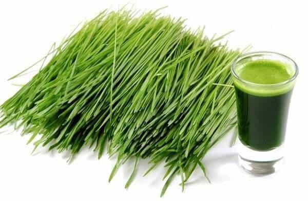 green barley plus działanie efekty